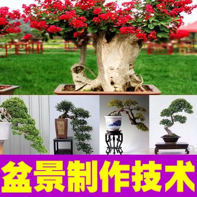 盆景制作技术视频教程+电子书资料 盆景栽培防治修剪造型技术大全