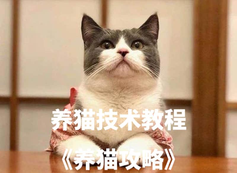【宠物饲养】养猫技术教程养猫攻略