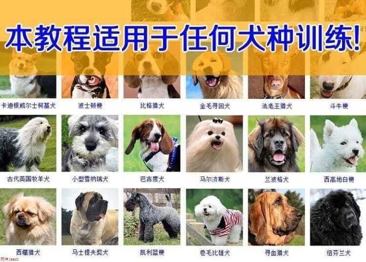 【训狗方法】训狗教程视频讲座